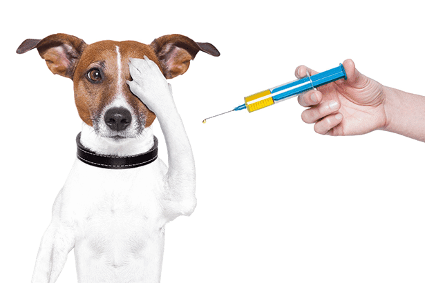 K9 Vaccine Clinic Courtesy of Pet Project Foundation