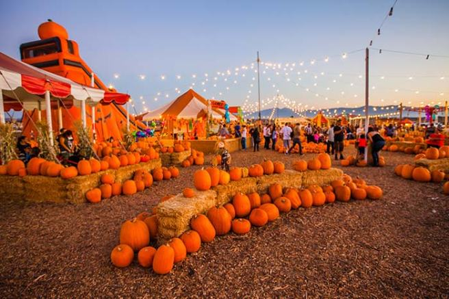OC Fairgrounds Pumpkin Patch Courtesy of OCFair.com