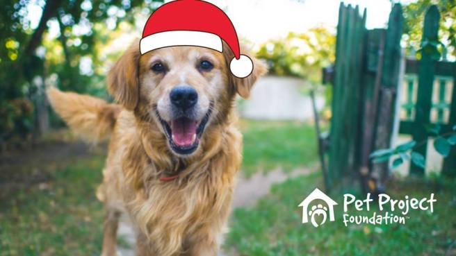 Dana Point Harbor Santa Paws December 7 2019 Courtesy of Pet Project Foundation