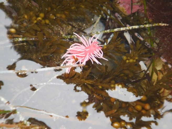 Tidepools Courtesy of CrystalCove.org