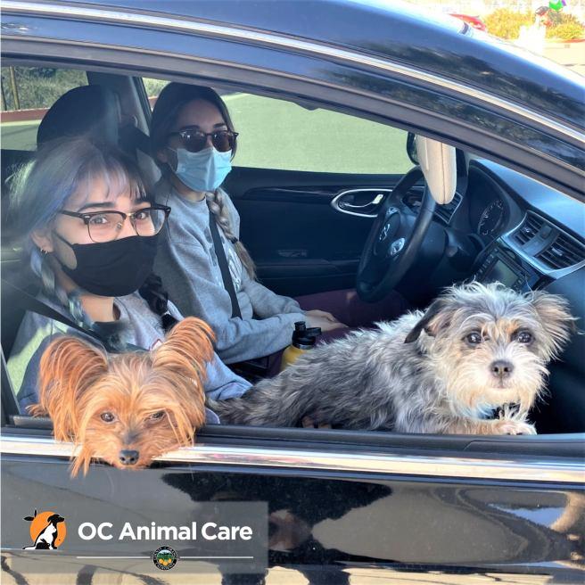 Orange County California Animal Care Drive Thru Pet Pantry Courtesy of OC Animal Care:Facebook