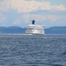 One of the fleet of BC ferries that connects the Island to the rest of Canada