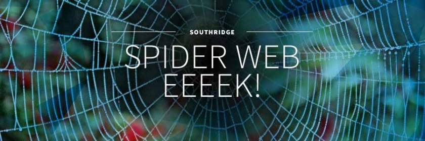 Spider Webs and community group