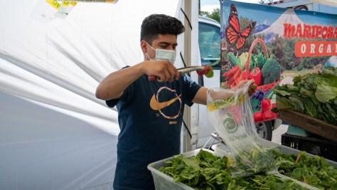 Mariposa Farms vendor packs mixed greens for a market-goer.