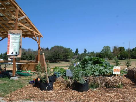 Photo of the produce garden by Black Star Farmers in Jimi Hendrix Park.