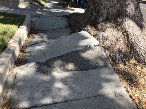Close-up photo of broken sidewalk pushed up by the neighboring tree roots.