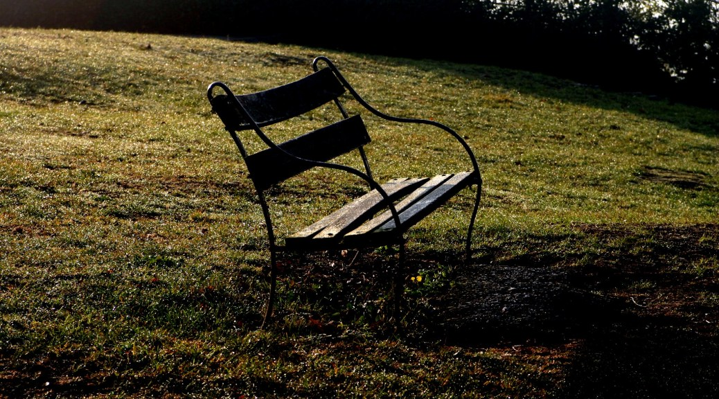 Photo depicting an empty park bench in a field of green with dark trees in the background.