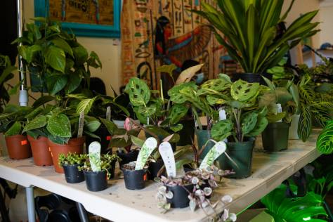 Photo depicting various indoor potted plants for sale at The Liink Project.