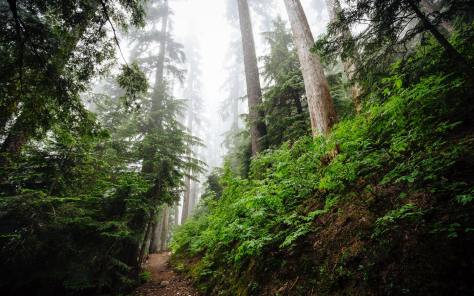 Photo depicting a hiking trail through a foggy forest.