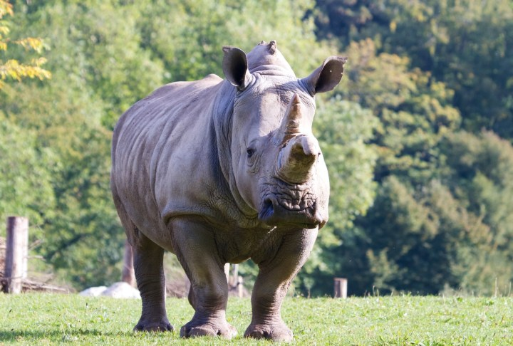 Marwell Zoo - Rhino.jpg
