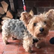 dog-friendly-burley-manor