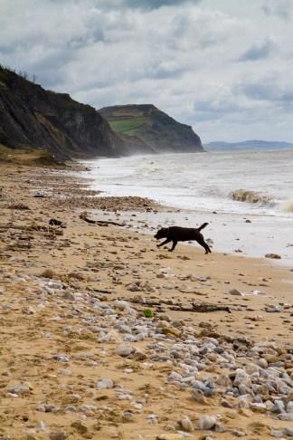 Charmouth beach in Dorset