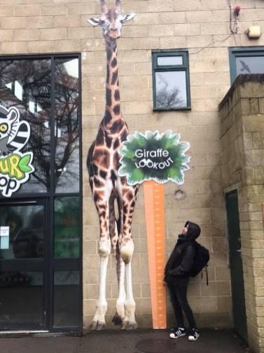 Marwell Zoo - Giraffe house