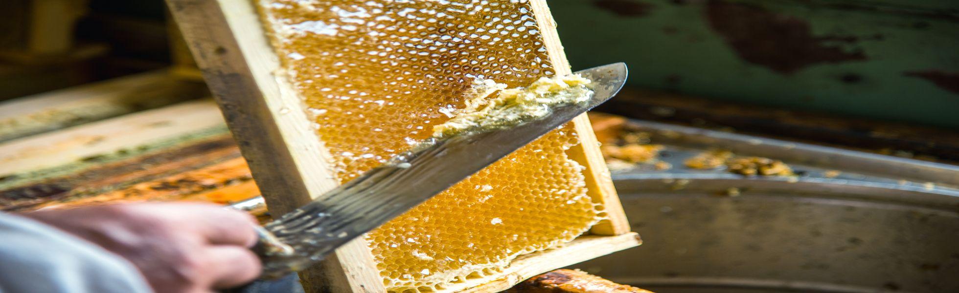 Hampshire-honeycomb