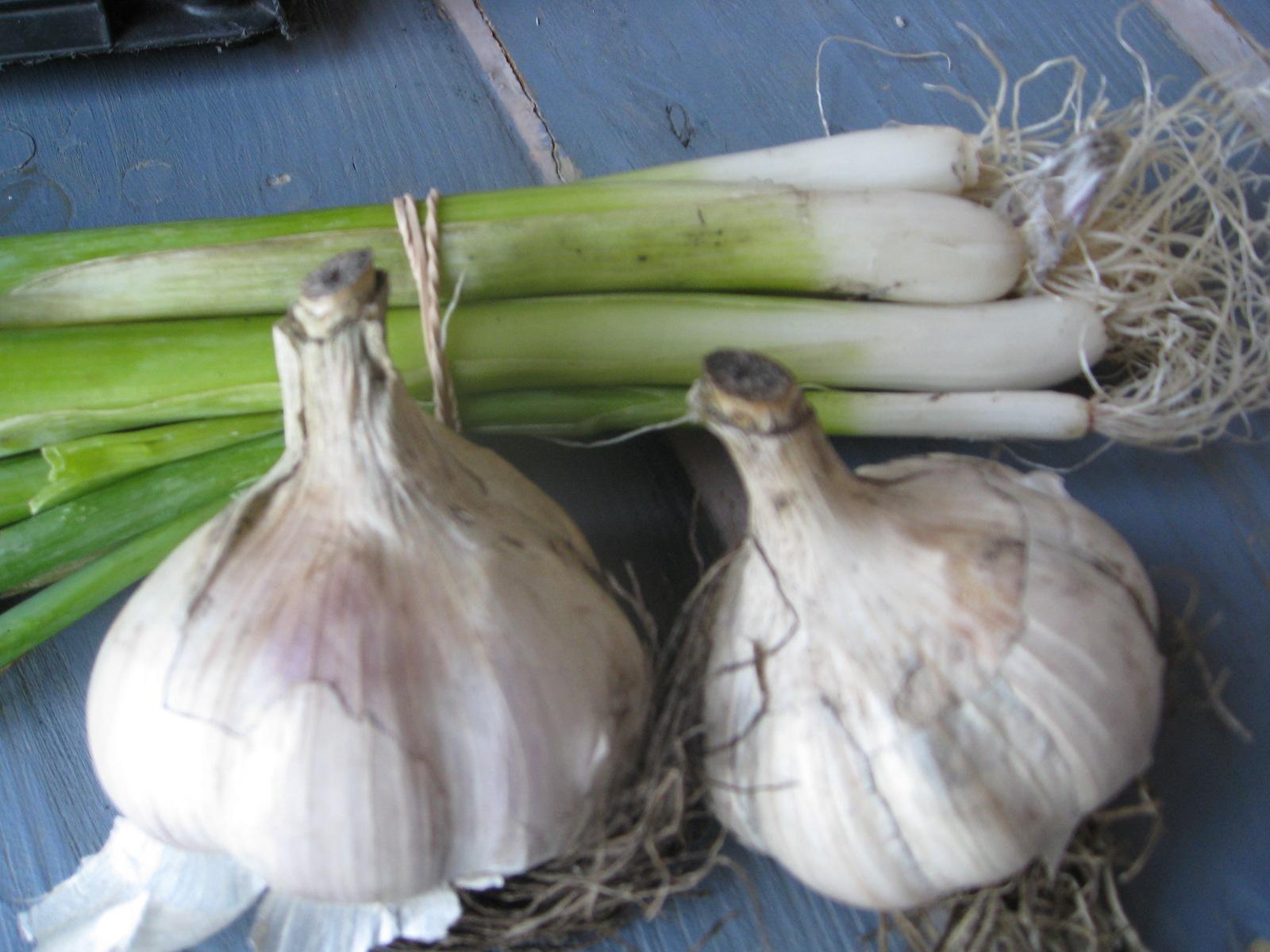 garlic luv