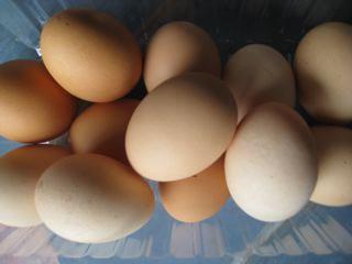 W1 - Eggs