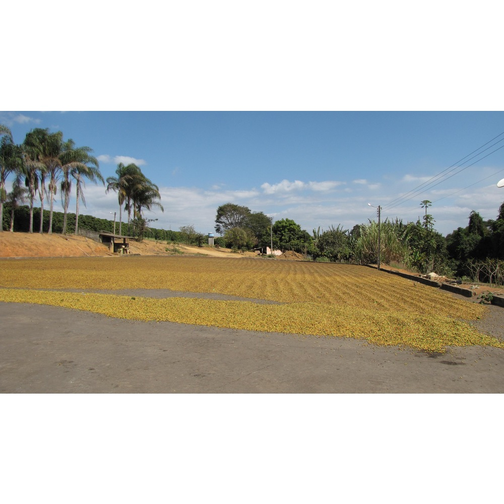 drying patio with cherries sprawled out at Jaguara farm in Brazil
