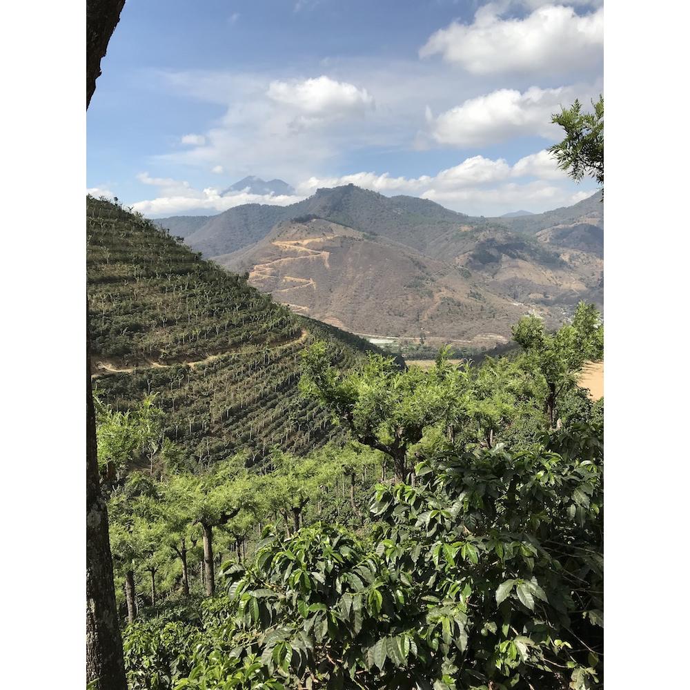 Photo of El Potrero farm on the hillsides of Antigua Guatemala