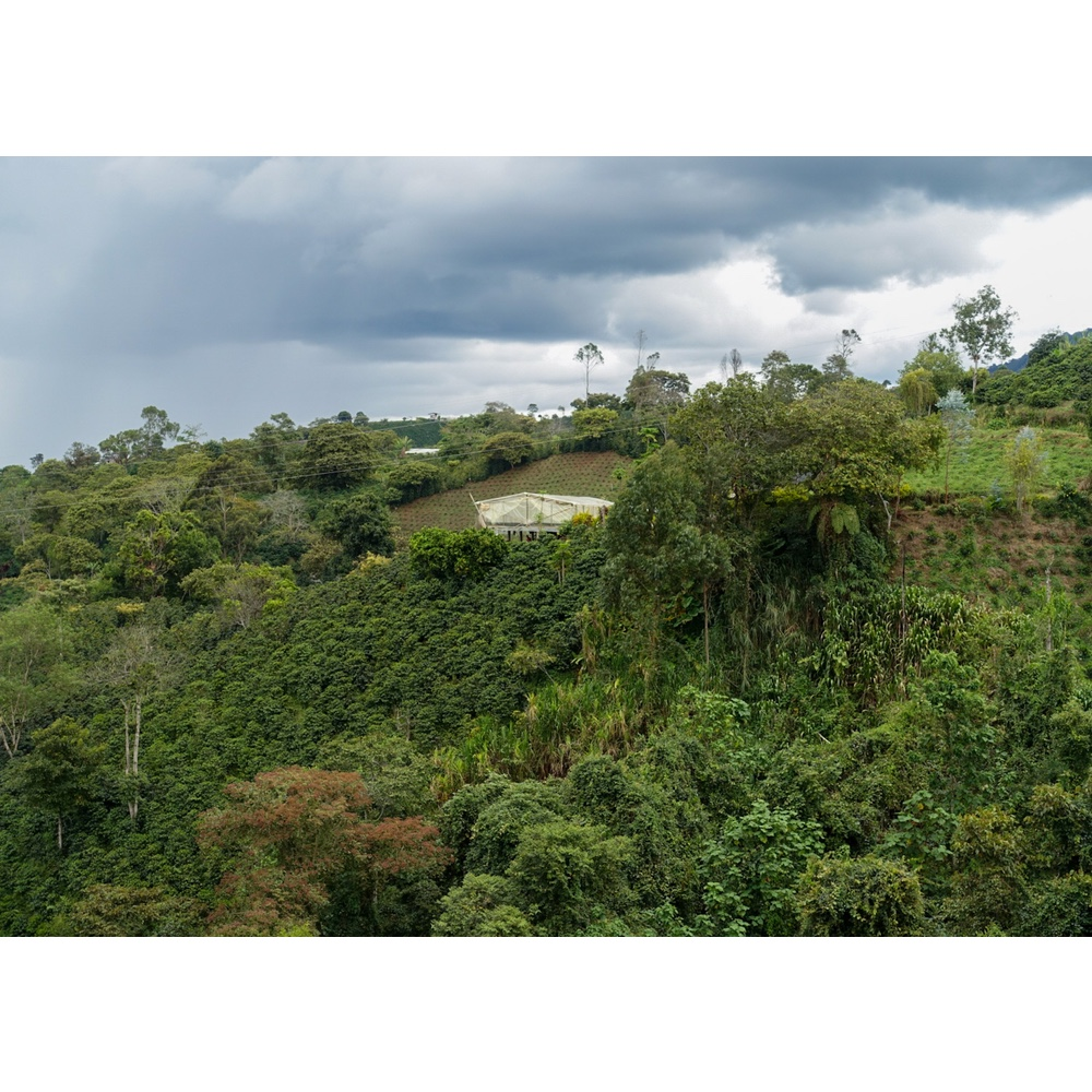 view of a coffee farm and the processing and drying area for coffee production in san agustin huila colombia