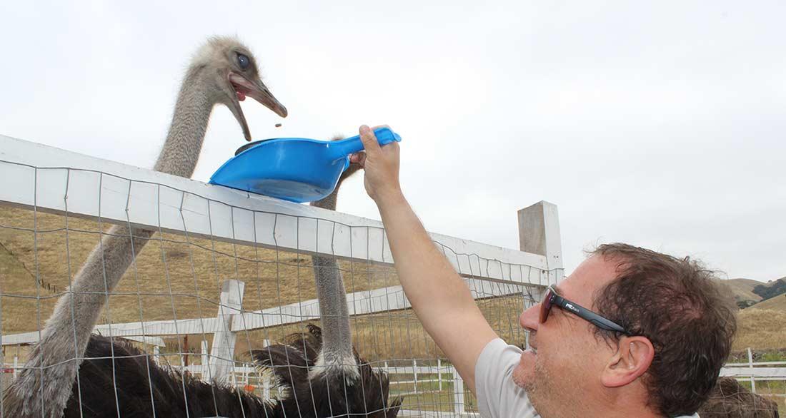gilroy ostrich farm
