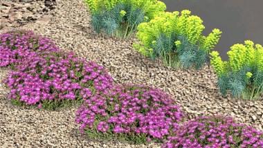 Succulent Plants for front yard