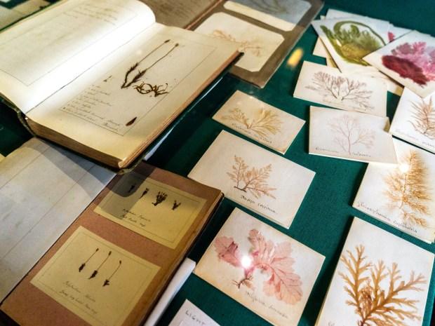 Case of botanical drawings