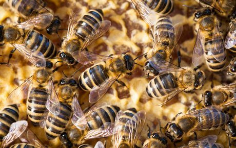 Bee Fumigation South West