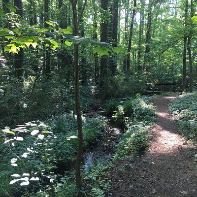 Jaycee Park trail