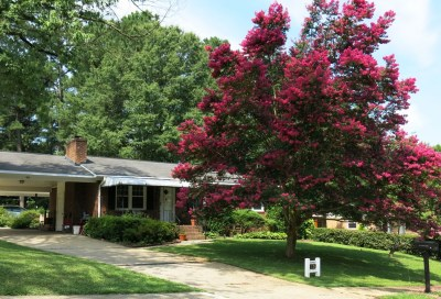 lineberry-crepe-myrtle