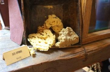Sea sponge from 826 Valencia pirate store