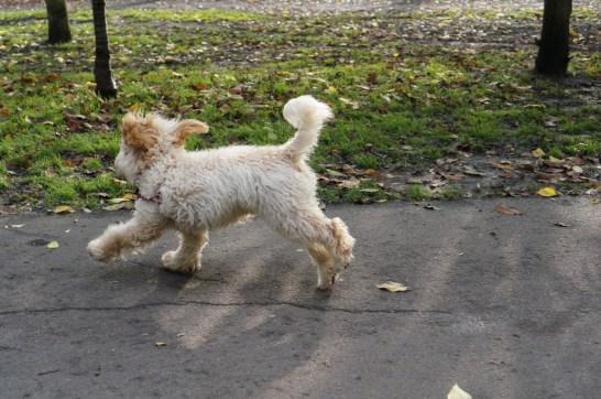 dog Holland Park London leash free dog run