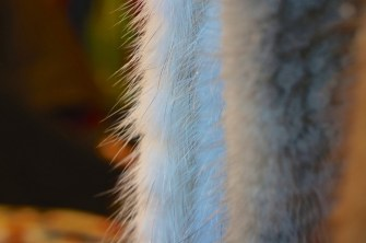 This fur was actually faux-- at the Kungstradgården Christmas market