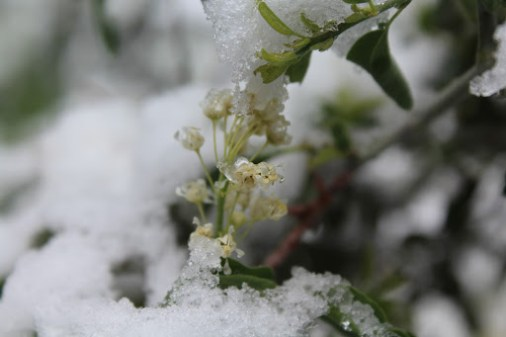 Snow in California: unlikely… Flowers growing in snow: very unlikely… Both happening at the same time: priceless.