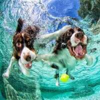 Underwater Dogs Seth Casteel