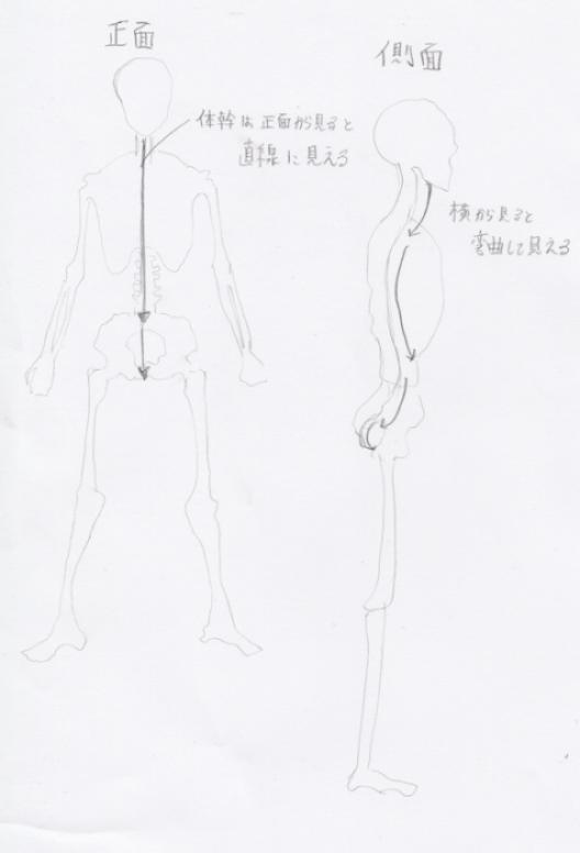 正面と側面の体軸の見え方の違いについて