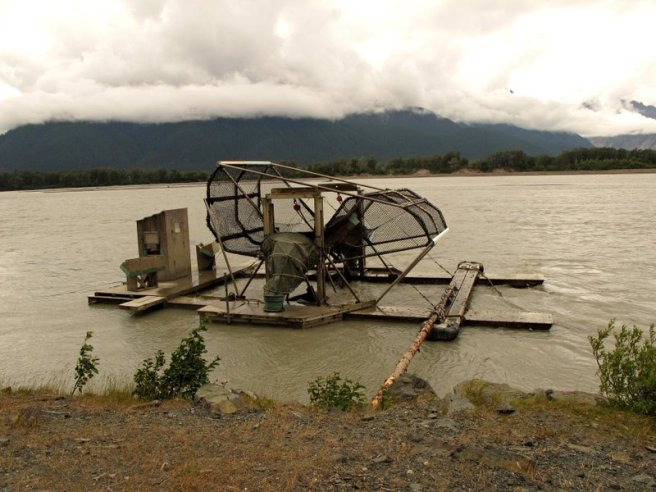 6734912-fish-wheel-to-check-salmon-run-0