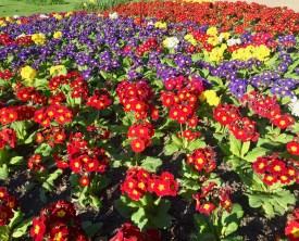 Beautiful flowers in Dublin