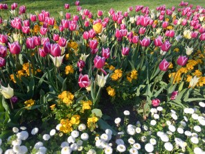 Flowers in a park in Dublin