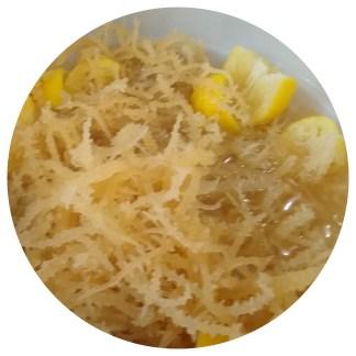 Soaked sea moss