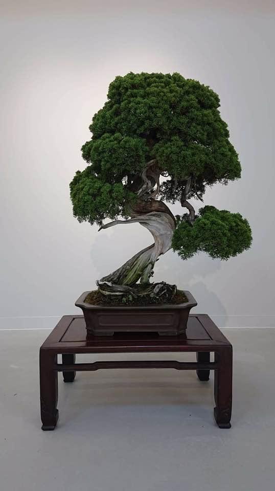 Stolen Bonsai
