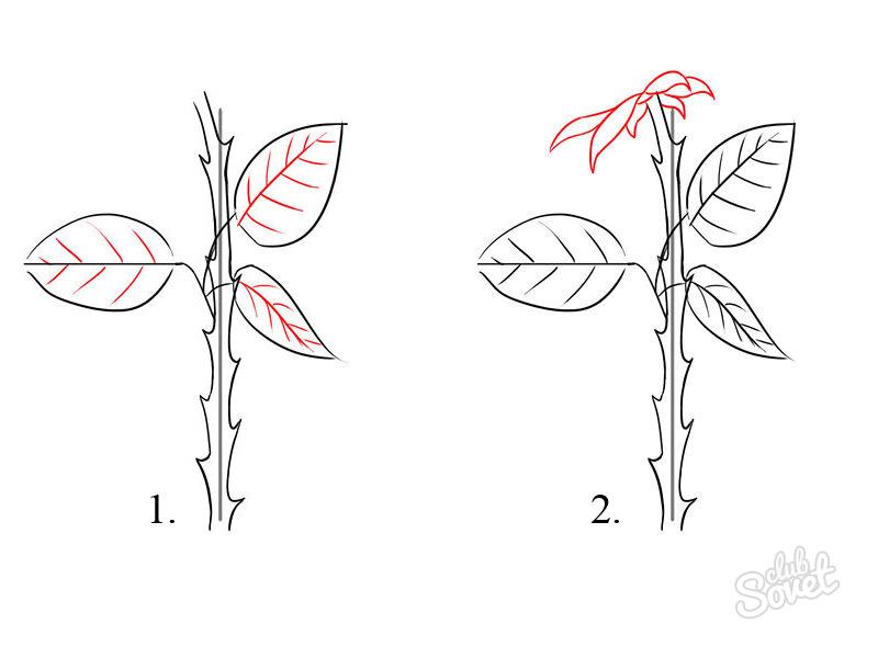роза по этапам карандашом пошаговый урок как нарисовать розу
