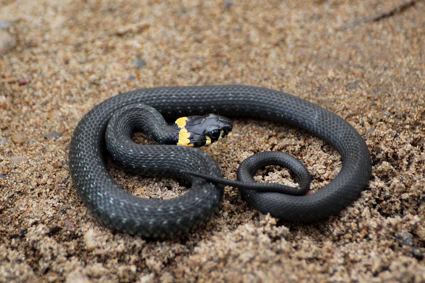 змеи в татарстане в картинках него