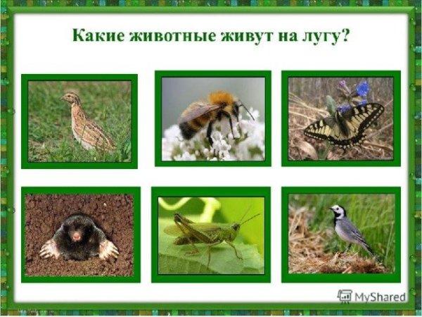 Какие животные живут на лугу