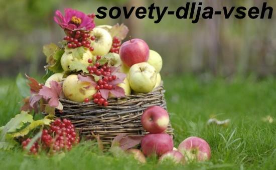 Яблочный Спас: значение