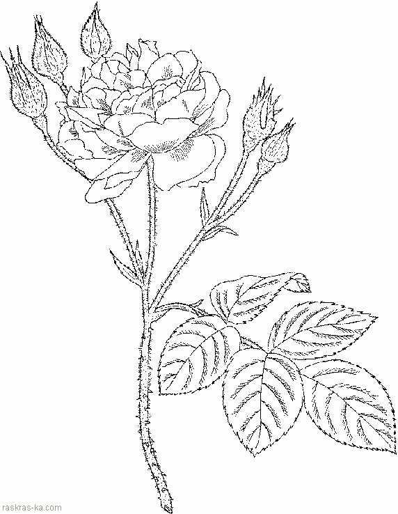 Цветочка раскраска – Раскраски Цветы скачать и распечатать ...