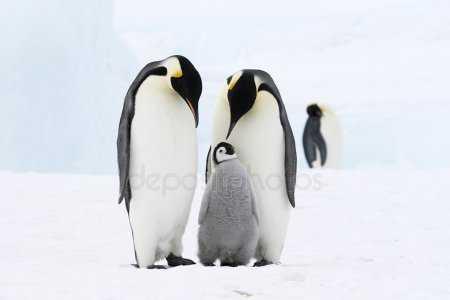 Картинка для детей пингвин – пингвин Фотографии, картинки ...