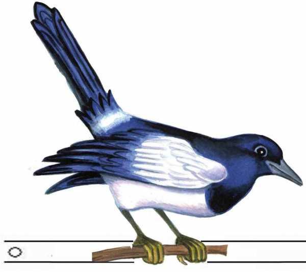 Картинки птичек для детей цветные – Картинки птиц для ...