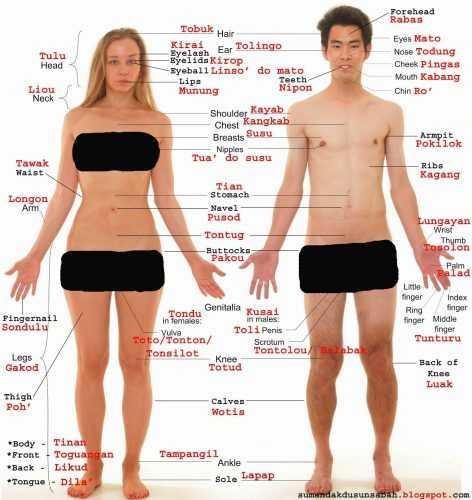 Карточки для детей части тела на английском – Английские ...