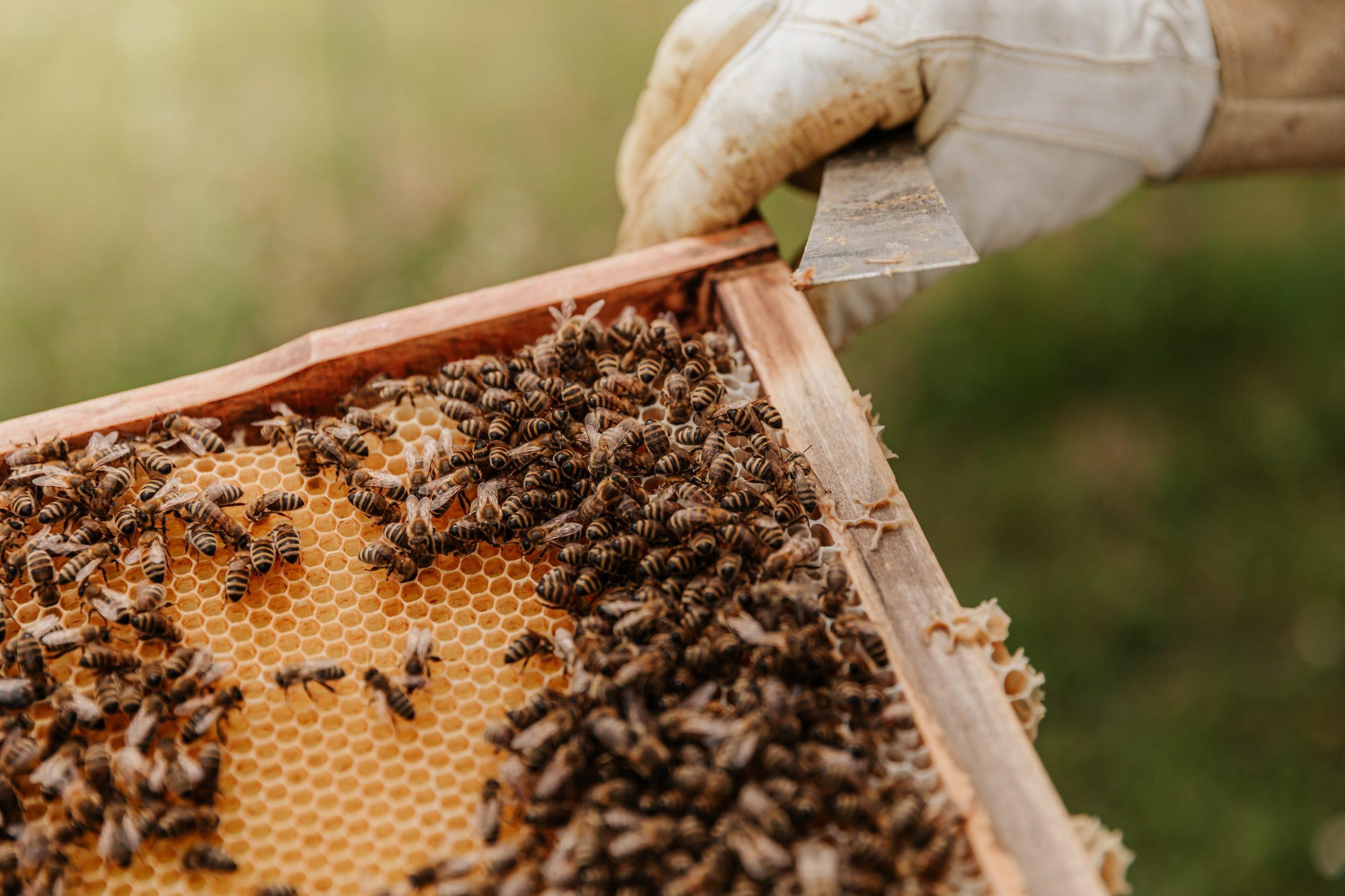 beekeeping alabama