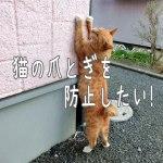 猫の爪とぎを防止したい